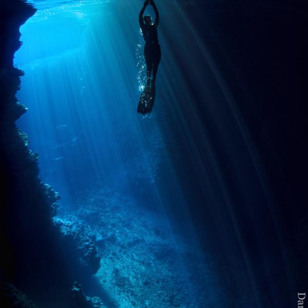 jacqui shipp free diving